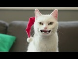 Жутенький новогодний  котик